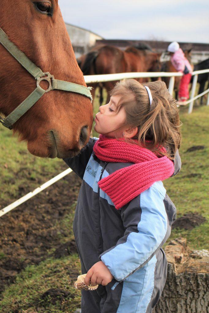 Girl Kiss Horse